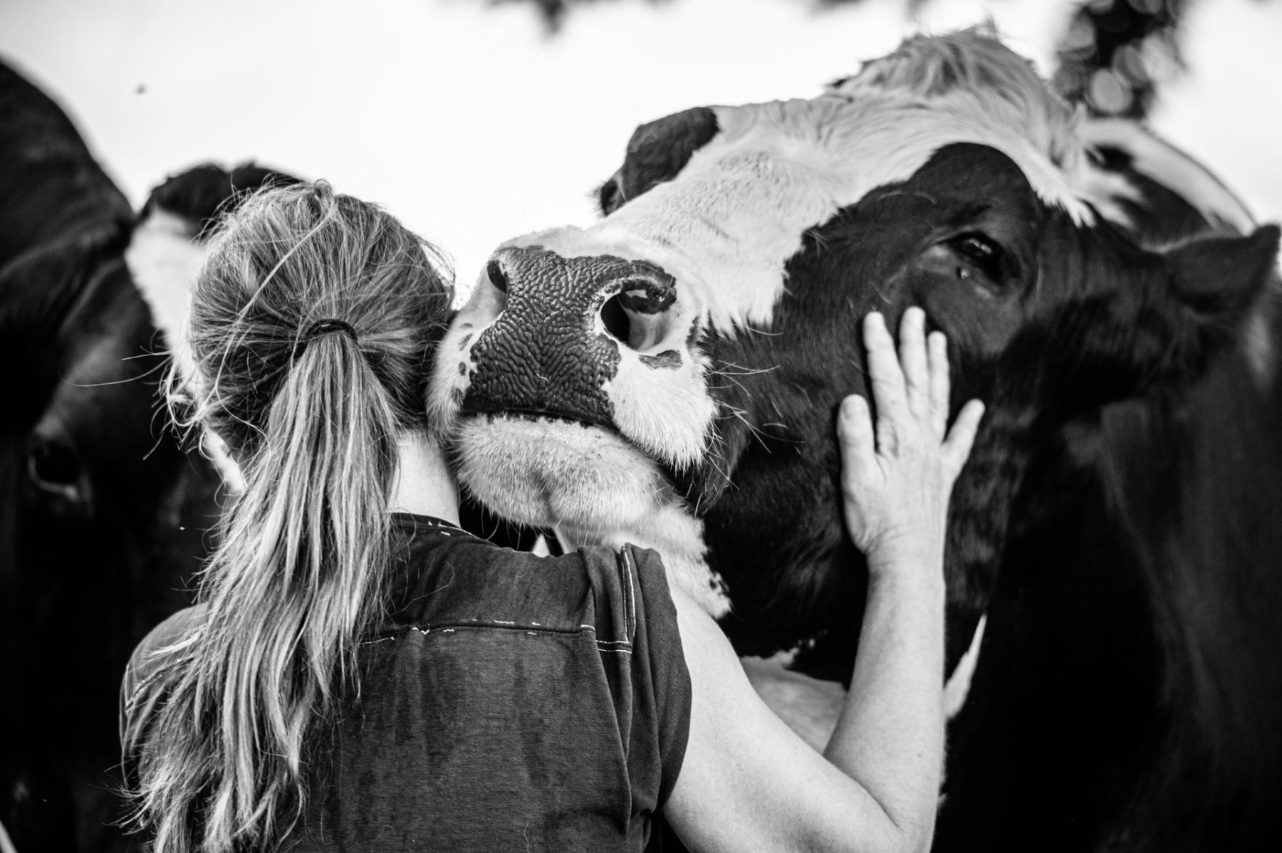 Sanctuary - We Animals Media