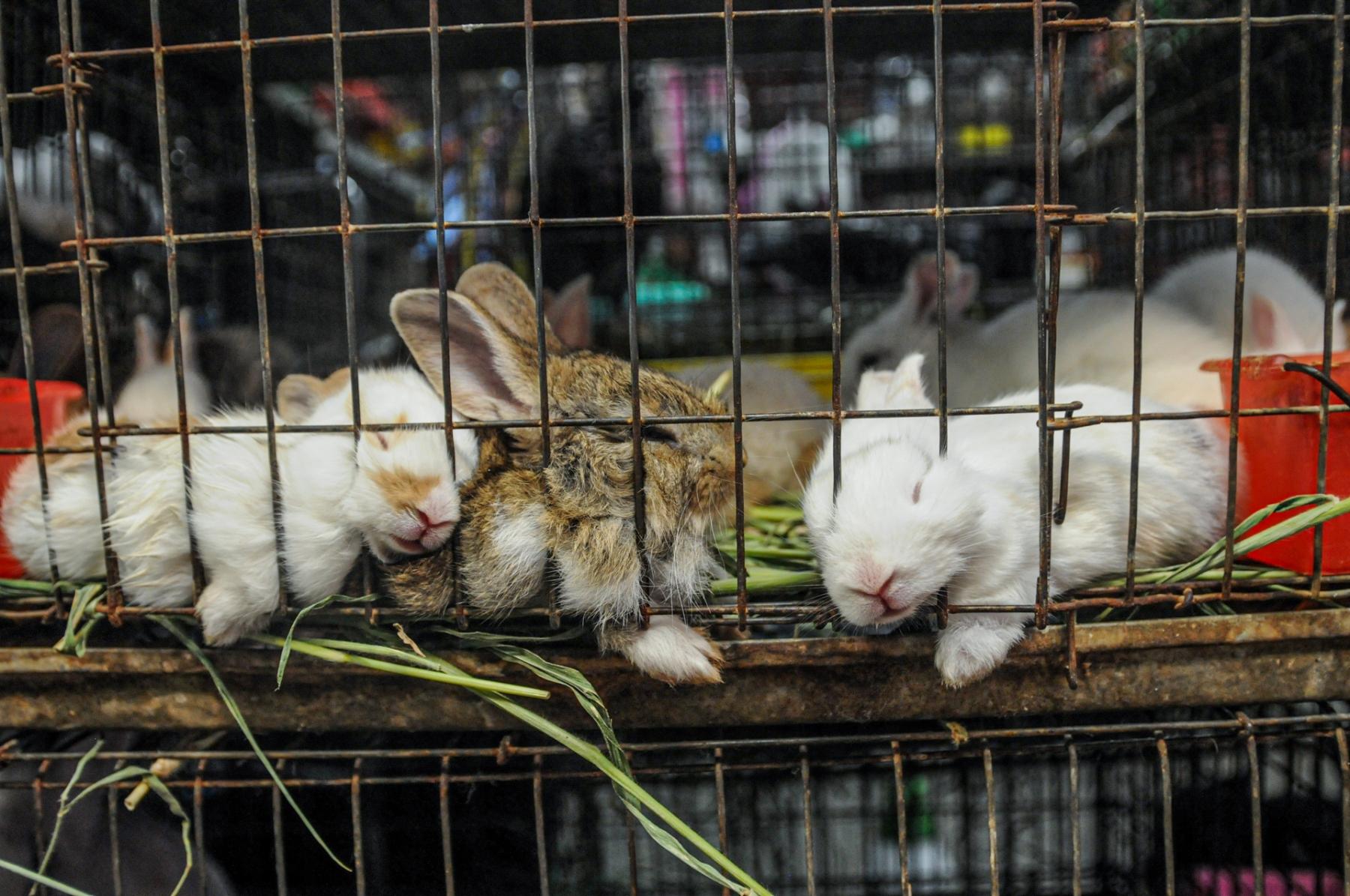 Animal Markets - We Animals Media