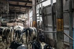 Dairy barn. Taiwan, 2019.