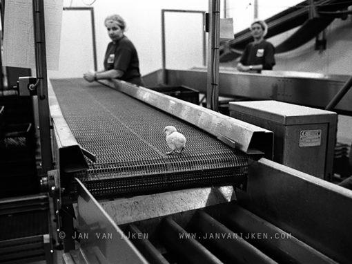 Interview With Photographer and Filmmaker Jan van IJken