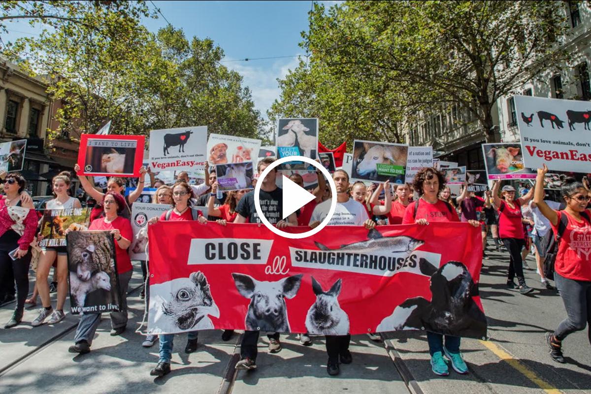 Activism in Australia