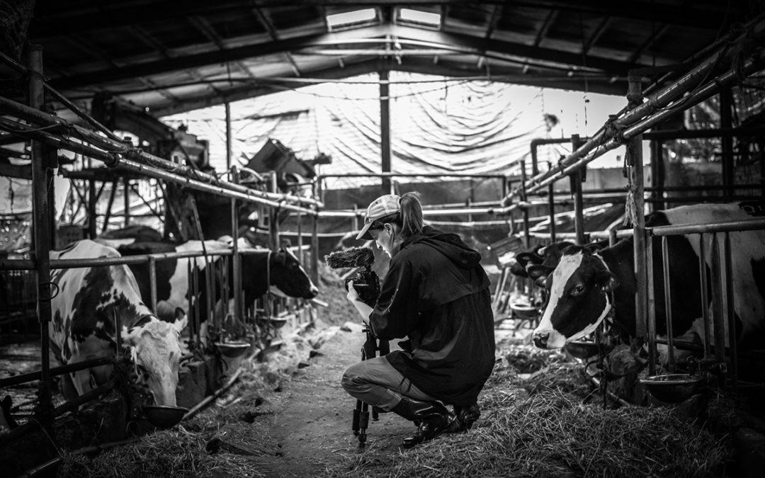 Dairy Farm. Taiwan, 2019.