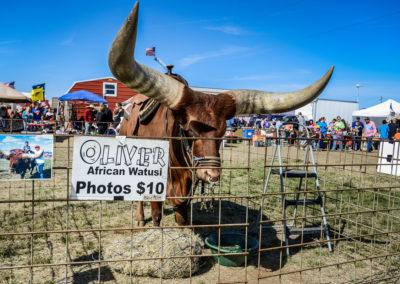 Animal Fairs