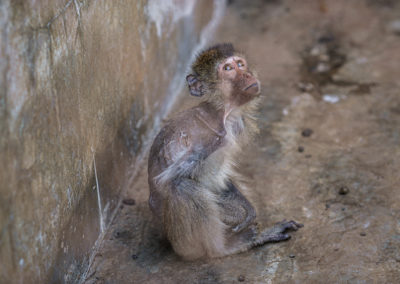 Macaque Breeding Facility