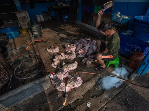 We Animals Media: An Expose on Animal Clubbing at Thai Slaughterhouses