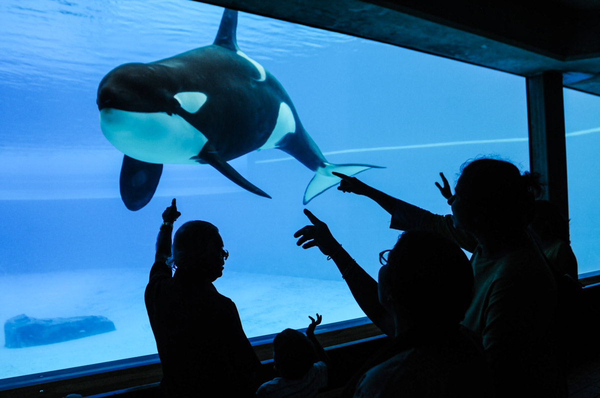 The Current State of Cetacean Captivity