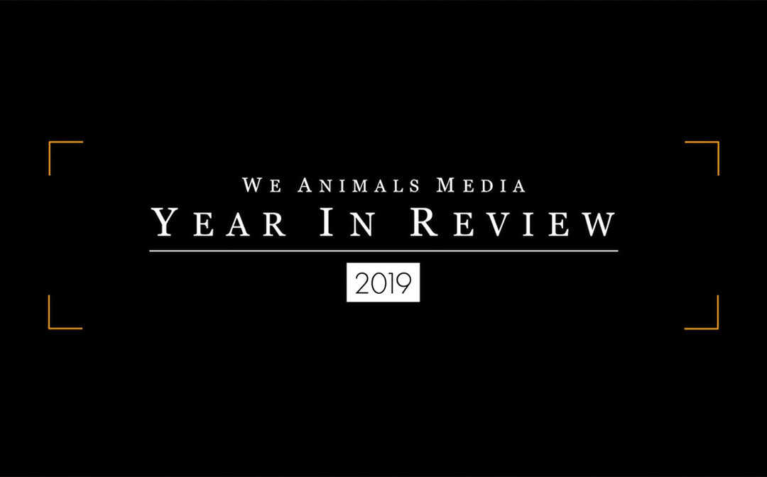 2019 Our Year In Review