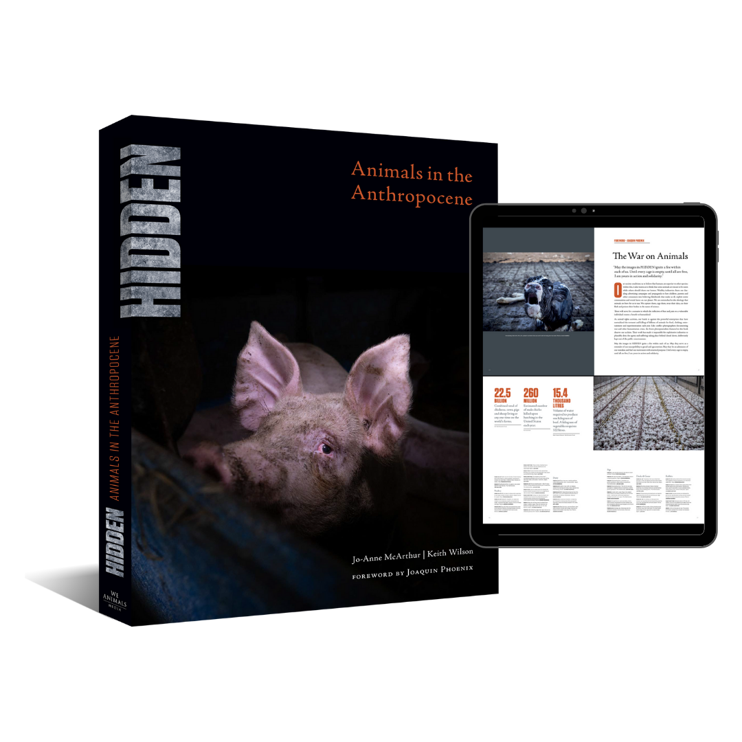 HIDDEN: Animals in the Anthropocene  E-Book